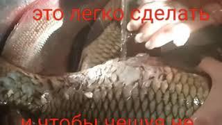 Способы  чистки рыбы.Рецепт.Фаршированная щука.Запеченый картофель.Готовим в фольге на углях.Уха.