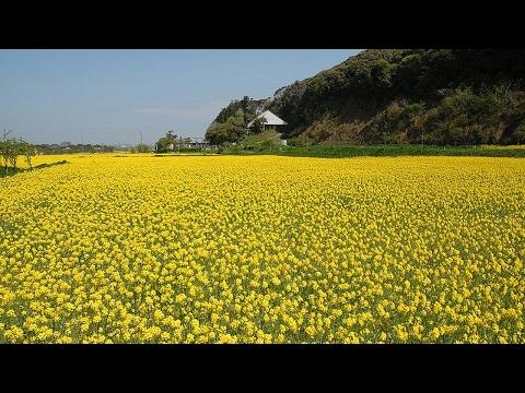 HOT NEWS Traveling In Chita Aichi Japan Tourism
