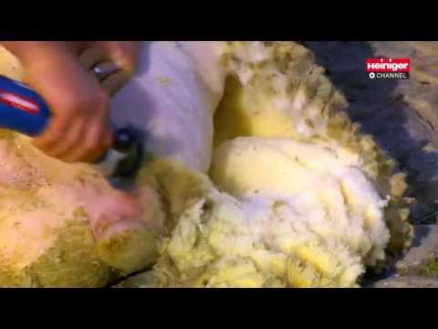 Koyun Kırpma Makinesi