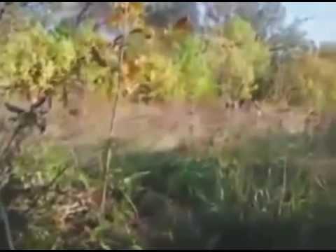 Sabotage Intelligence Group Militia of Novorossia | Ukraine War