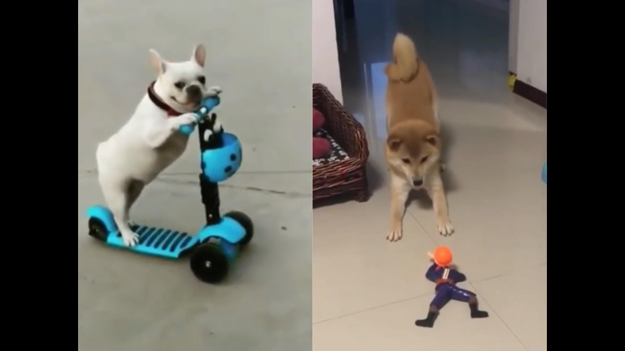 Dog Reaction To Playing Toy Funny Dog Toy Reaction
