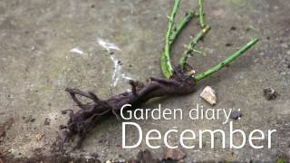 Garden Diary: December - Protect your plants, garden structures & tools