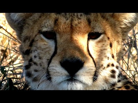 Exploring Masai Mara: A luxury game drive with Saruni Mara in Kenya