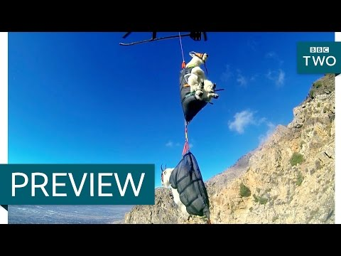 Flying goats - Nature's Weirdest Events: Series 5 Episode 2 Preview - BBC Two
