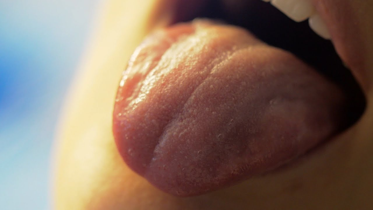 How do Taste Buds Work