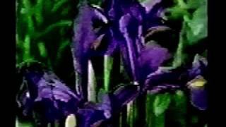 Chaotic Flowers (Ken Clinger)