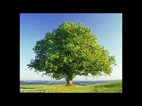 Tree - Music Concrete