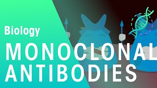 Monoclonal Antibodies | Health | Biology | FuseSchool
