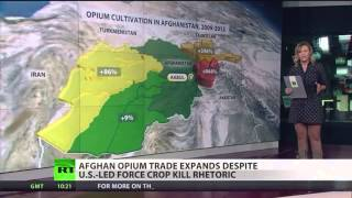 afghan opium production