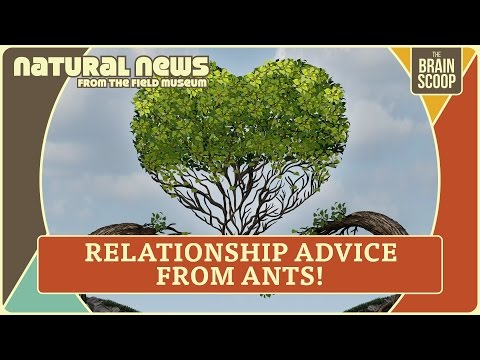 Sucky Fish & Relationship Advice from Ants | Natural News from The Field Museum | Ep. 3