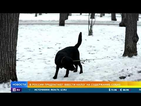 В России предлагают ввести налог на содержание собак