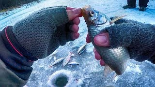 Вот это ПЛОТВА!!!Зимняя рыбалка-ловля плотвы на безмотылку-гвоздекубик