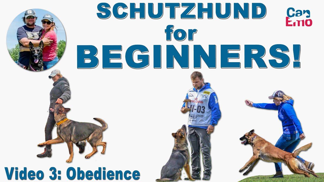Schutzhund For Beginners: Obedience!
