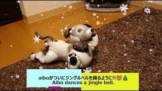 aiboがついにジングルベルを踊れるようになりました😻🎄 - Aibo dances a jingle bell. 【アイボ】