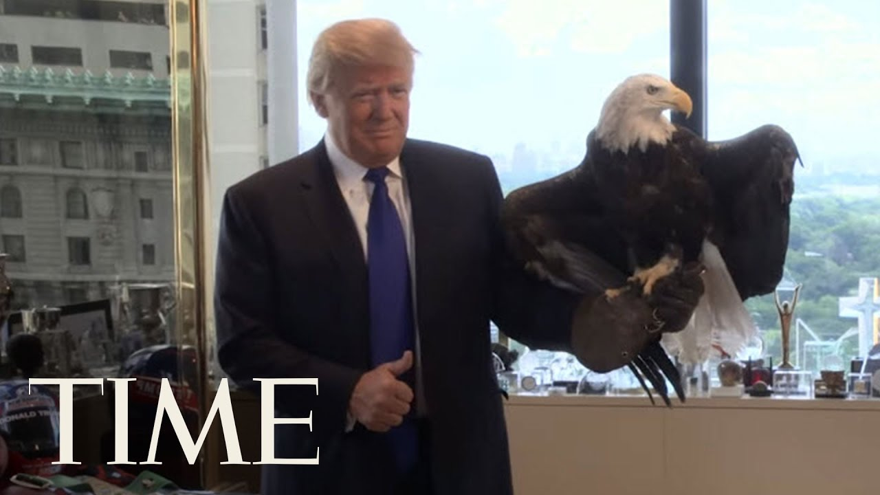 maxresdefault watch donald trump dodge a bald eagle person of the year 2015