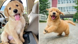 Funniest & Cutest Golden Retriever Puppies #6- Funny Puppy Videos 2020