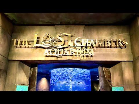 The Lost Chambers Aquarium Vlog 6th December 2019