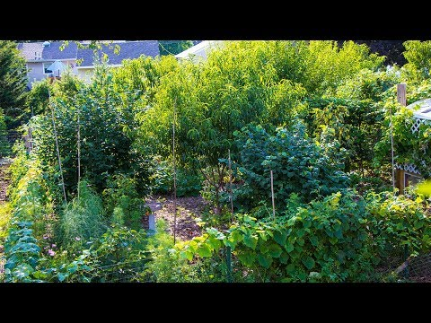 Backyard Permaculture FOOD FOREST, Functional Design
