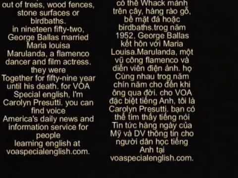 Luyện nghe tiếng Anh có hỗ trợ phụ đề ( Anh_Việt ) Part 1
