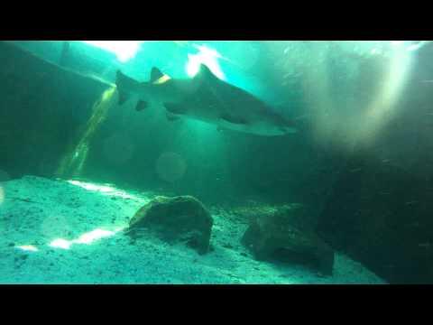 Duiken Cape Town - Two Oceans Aquarium November 2012 Part 1