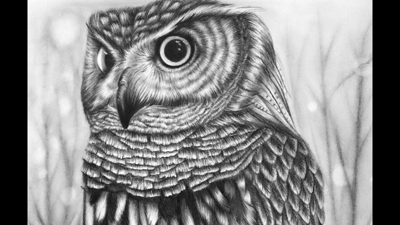 Owl - Time Lapse Drawing