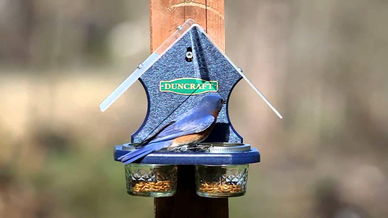 Duncraft Mealworm Delight Bird Feeder