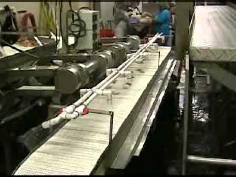 prawnto shrimp machine