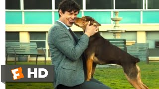 A Dog's Way Home (2018) - Finding Her Human Scene (9/10) | Movieclips