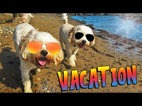 Vacation Vlog | Isle of Wight