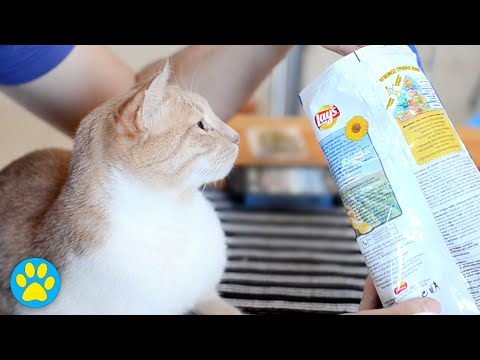 This Cat Is Obsessed With...