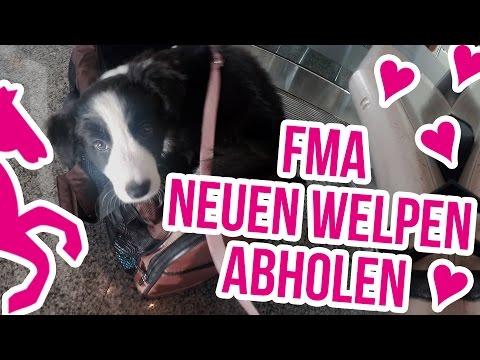 FMA - Meinen neuen Welpen abholen