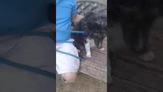 The Dog Shelter visit- July 21 2018