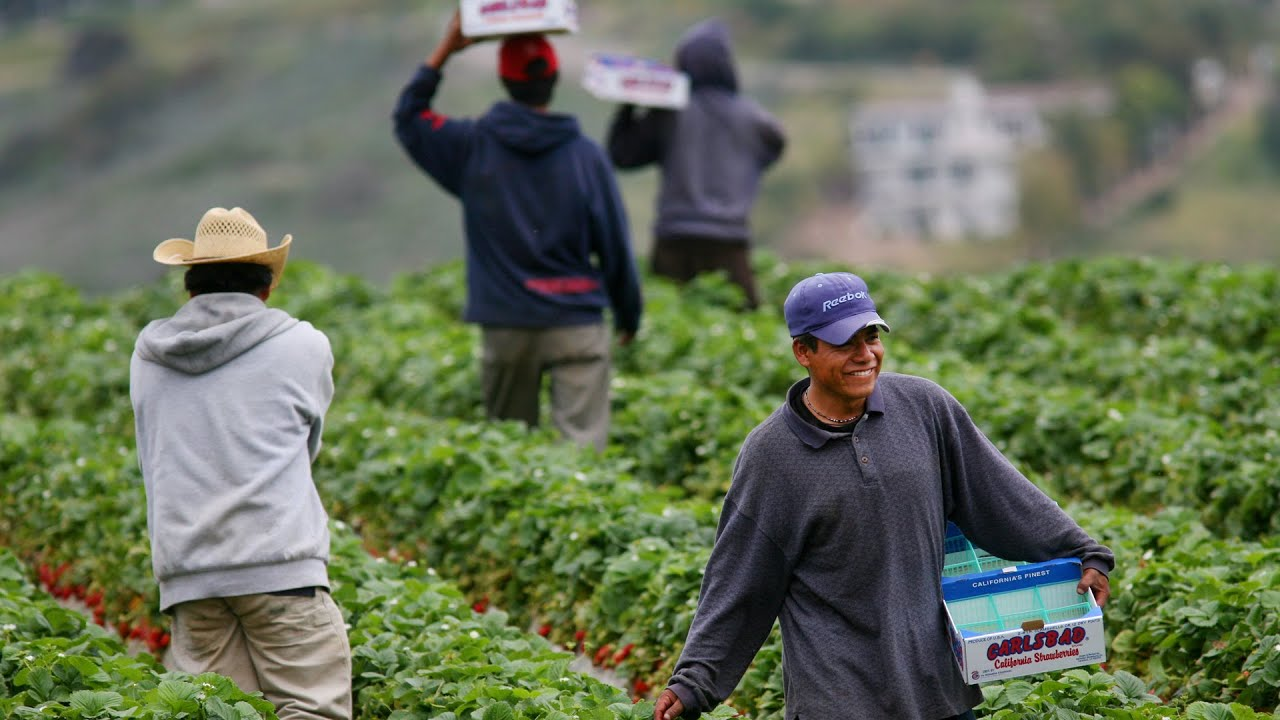 Seguro para los trabajadores del campo