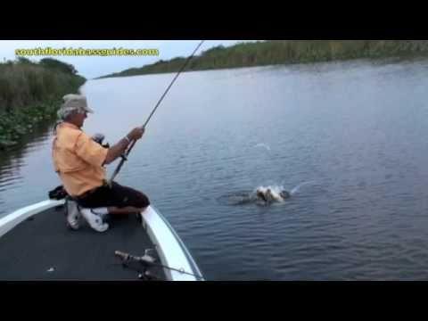 Top water bass fishing florida everglades bass fishing for Best bass fishing in florida