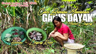 🔴Gadis Dayak Cari Lengkuas Dihutan Untuk Masak Daging Rusa Kehidupan Suku Dayak Pedalaman Kalimantan