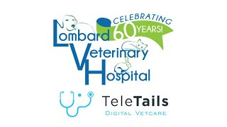 TeleTails: How To Connect with Lombard Veterinary Hospital