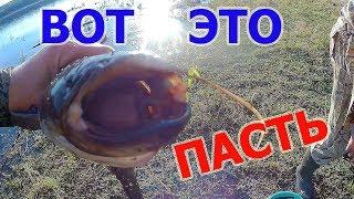ВОТ ЭТО ПАСТЬ.Ловля сома на лягушек. Рыбалка с ночевкой . Уха у костра