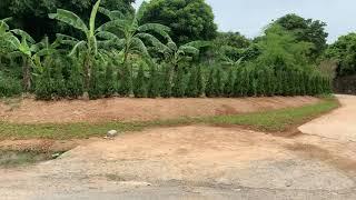 Cổng vào dự án Hasu village kỳ sơn hoà  bình tiến độ mới nhất ngày 13/7