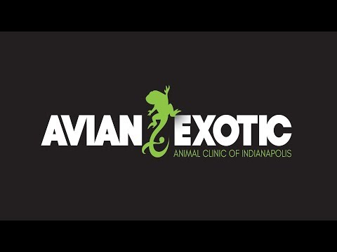 The Avian & Exotic Animal Clinic Of Indianapolis