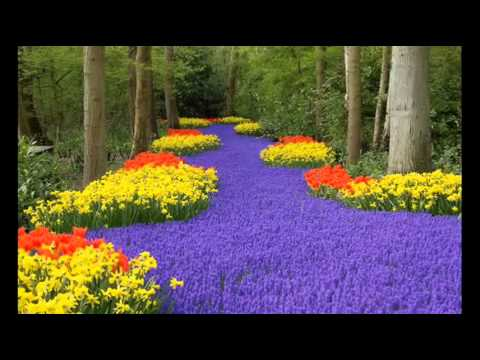 20 Идей красивых цветников.   Цветы в саду.