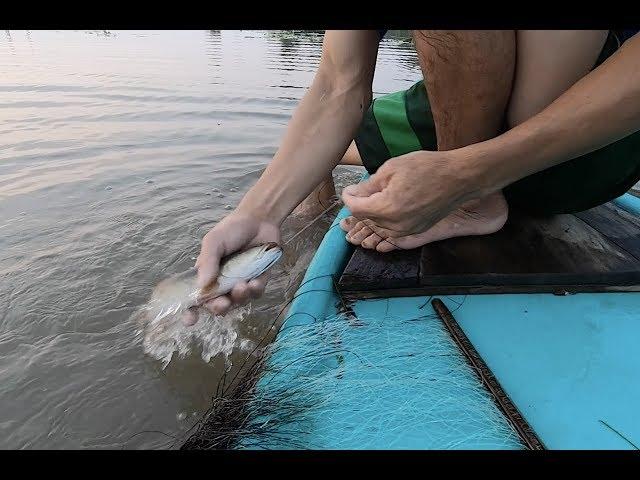 Giăng 2.000 lưỡi câu bắt cá lóc, cá trê đồng cực hay - Khám phá vùng quê
