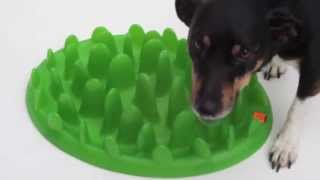 Green Interactive Slow Food Bowl for Dogs