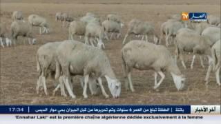 اخر اخبار قضايا المجتمع الجزائري في الموجز المحلي