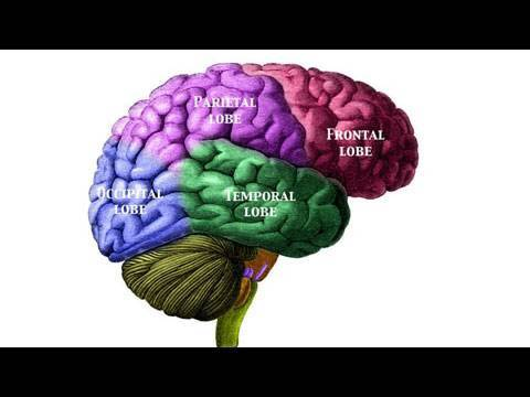 Neuroscience and Cognitive Training