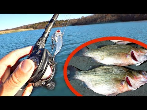 Fishing for GIANT White Bass!!! -CATCH CLEAN & COOK (Delicious!)