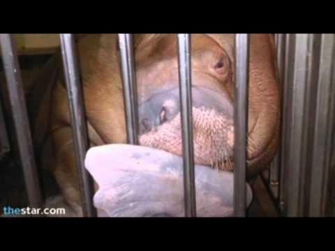 Animal Abuse at Marineland in Niagara Falls, Ontario