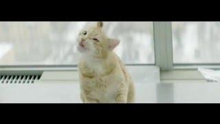 Говорящий кот по Бродскому в рекламе ЦИАН(Обалденная реклама ЦИАН. Говорящий кот по Бродскому)))) В центре рекламы оказался домашний рыжий кот, которы..., 2016-03-12T10:36:39.000Z)