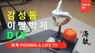 감성돔 이빨박제 DIY.(기록어 보관방법) #감성돔 #…