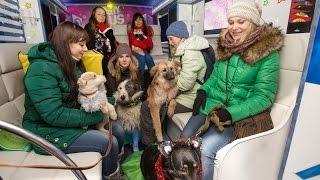 В Воронеже для бездомных животных в автобусе-лимузине устроили корпоратив