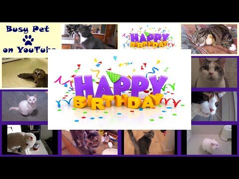 Happy Birthday Meowing Cats (Acapella)